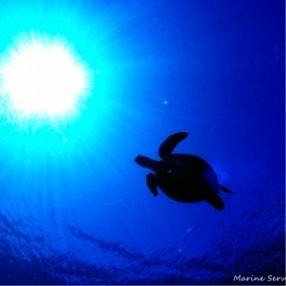 ウミガメ 石垣島