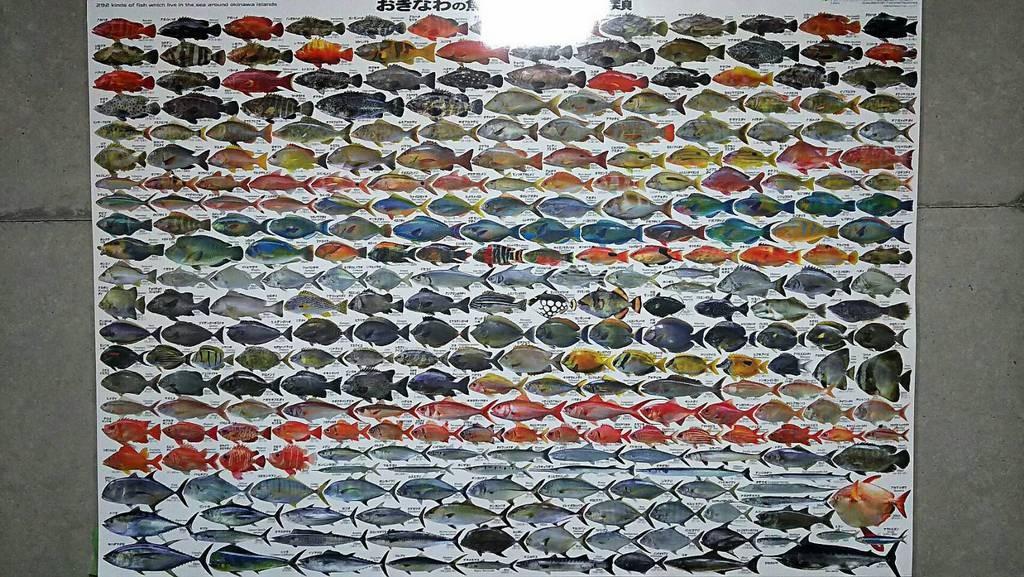 沖縄で釣れる魚達