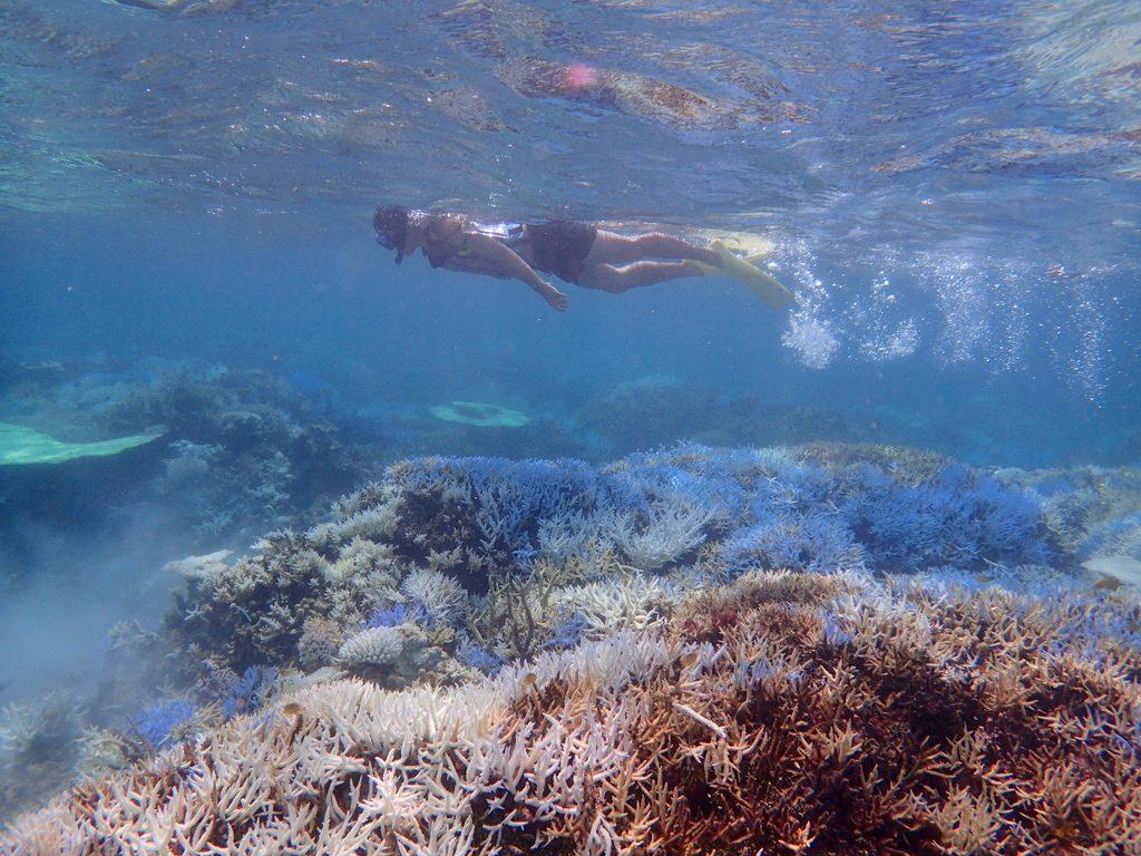 石垣島石西礁湖シュノーケル