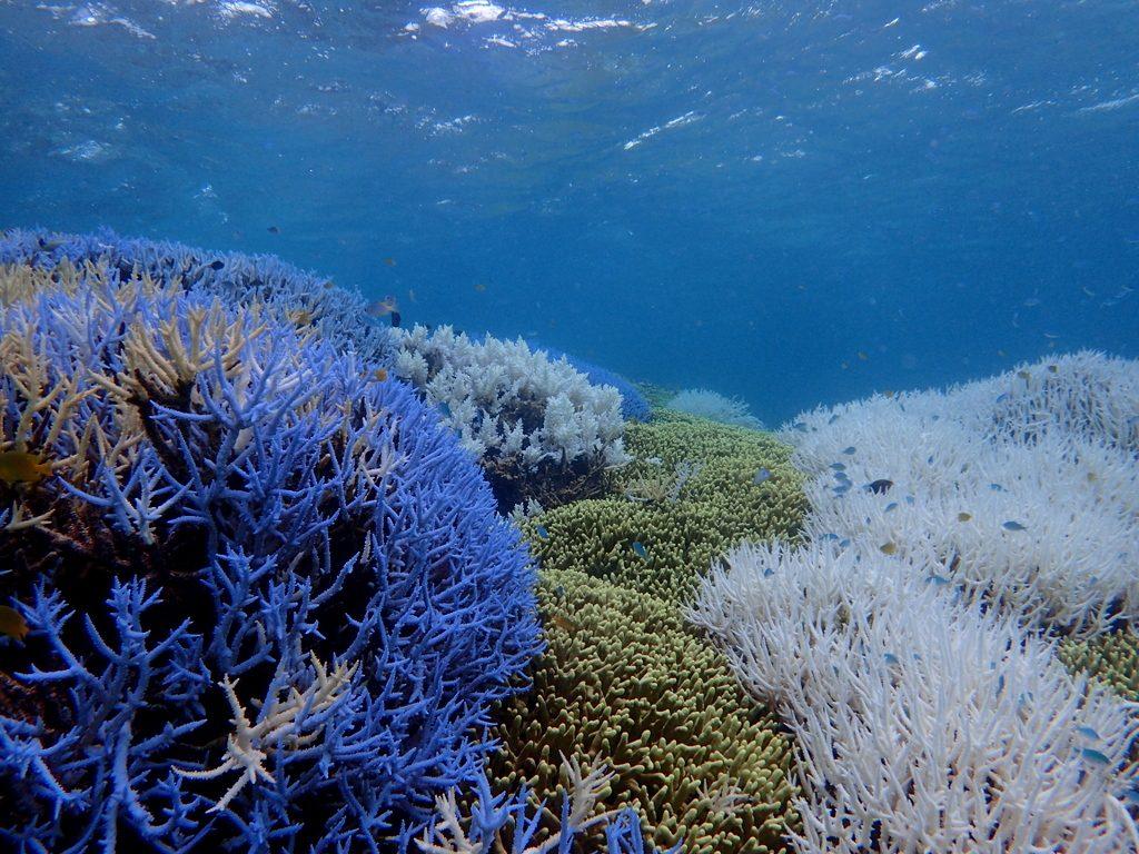 枝サンゴ群落