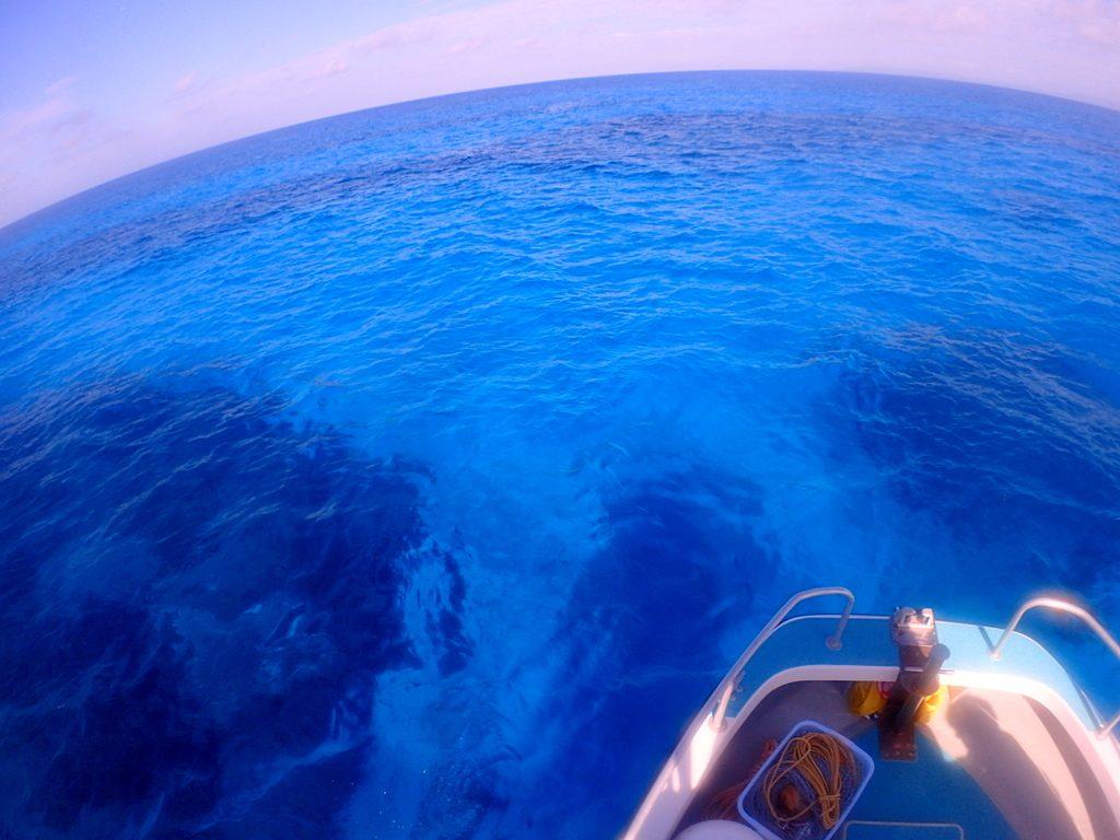 波照間ブルー、見事です。